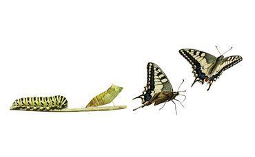caterpillar-to-butterfly-change-metamorphosis-370x229