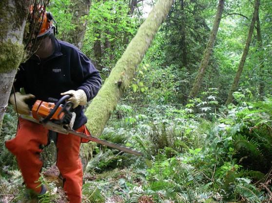 treecutting